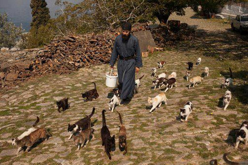 """Un preot american acceptă câini la slujbele sale. """"Câinii ajung în rai!"""""""