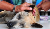 stock-photo-dog-under-anesthetic-83918113