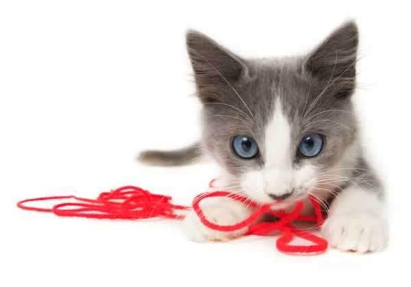 string-cat-play2
