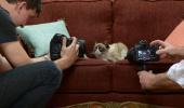 Reclama pentru care Grumpy Cat a primit o suma cu 4 zerouri in coada a aparut pe net!