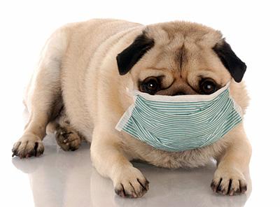 Cele mai frecvente boli virale la caini si pisici