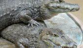 Fix unde nu te aștepți: Grădina Zoologică Sibiu ținea crocodili în mod ilegal