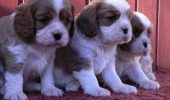 Exemplu de bună practică în rezolvarea câinilor fără stăpâni! Iubitorii de animale își pot găsi un prieten necuvântător