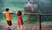 Hippo-at-the-Valencia-Bioparc