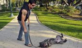 Lorenzo Lamas apără drepturile animalelor