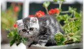Pisici sofisticate la Palat!