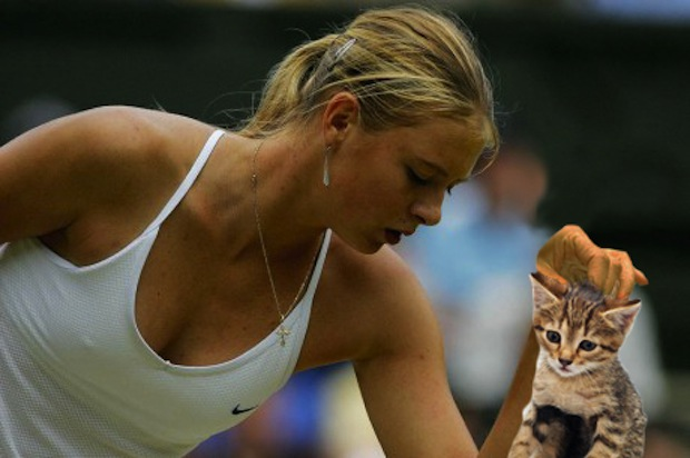 Sport-Balls-Replaced-with-Cats (11)