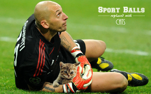 Sport-Balls-Replaced-with-Cats (14)