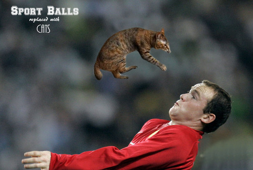 Sport-Balls-Replaced-with-Cats (19)