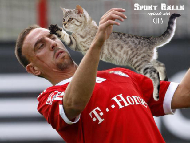 Sport-Balls-Replaced-with-Cats (24)