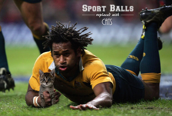 Sport-Balls-Replaced-with-Cats (5)