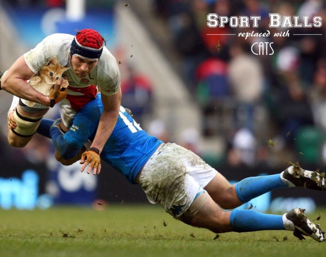 Sport-Balls-Replaced-with-Cats (6)