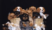 a-basket-of-puppies