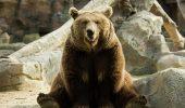 Iepurasul bataus si ursul