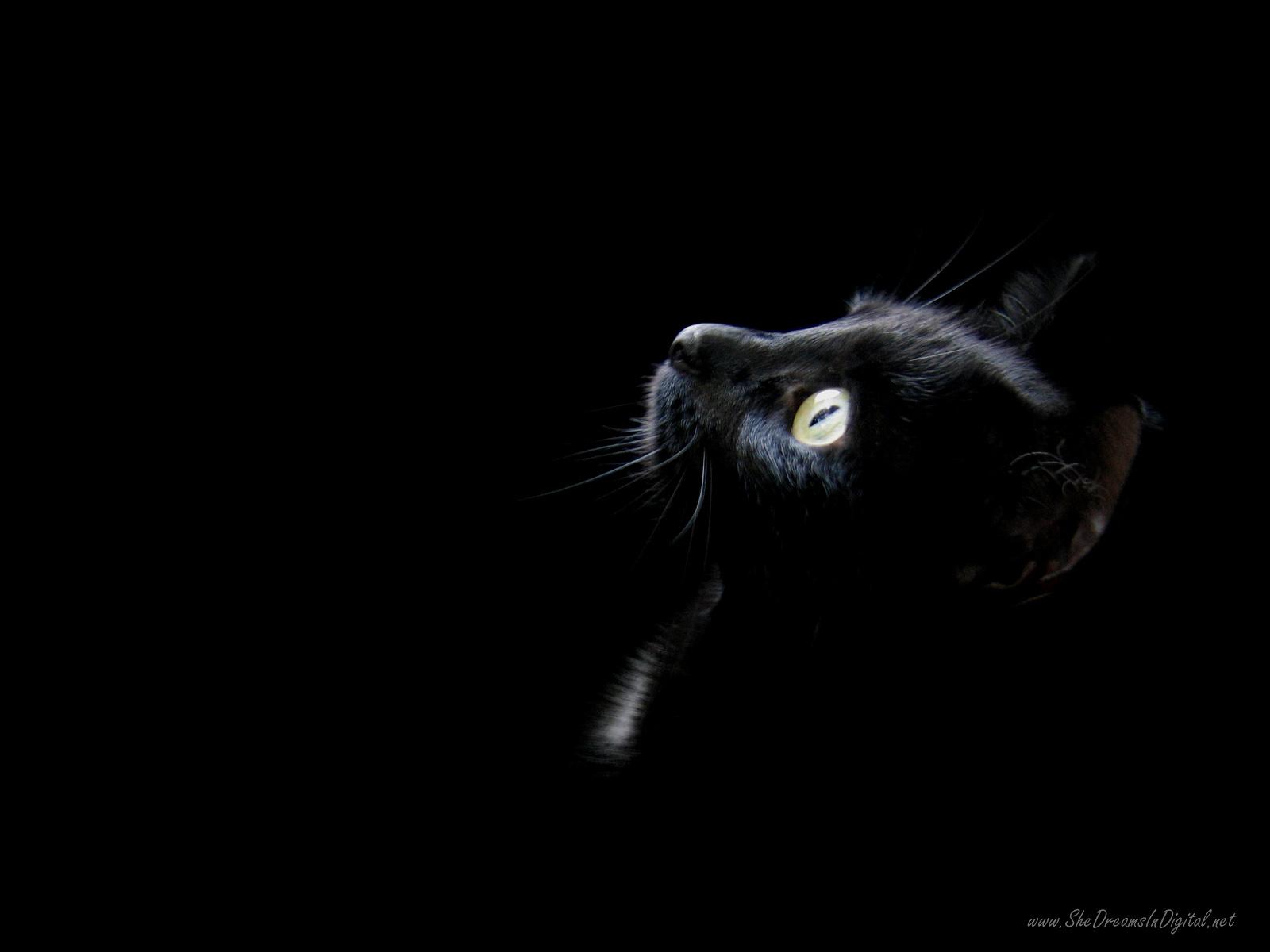 black-cat-16