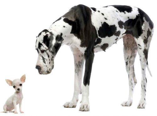 S-a dovedit științific! Câinii de talie mică trăiesc mai mult decât cei de talie mare