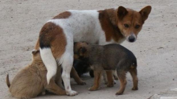 Despre sterilizarea la câini și beneficiile acesteia