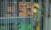 Cum amenajăm și întreținem colivia | Păsări de apartament