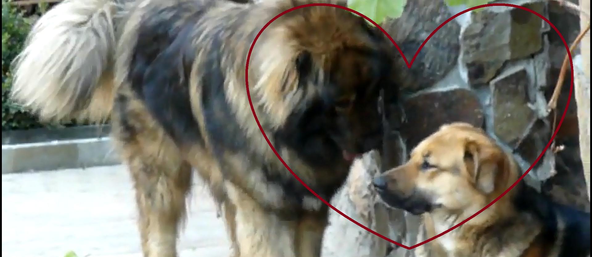 "Cearta conjugala in lumea animalelor: ""Hai, mai, iubito! Dar eu te iubesc!"""