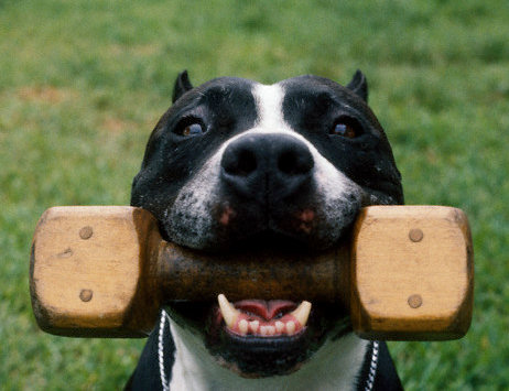 Cum să DRESĂM, acasă, câinele de companie! Iată cele mai tari TRUCURI