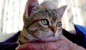 pisica-batran