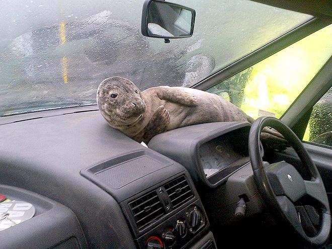 seal-car-660
