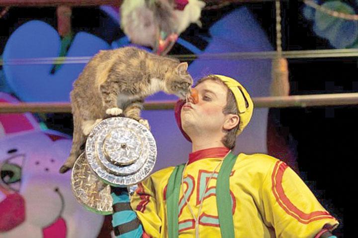teatru-pisici-3