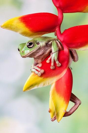 Beautiful Frogs Captured In Photographer's Garden