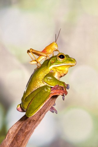 Beautiful Frogs Captured In Photographer's Garden