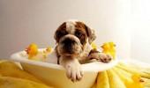 1346270114_433614411_1-Fotos-de--perros-limpios