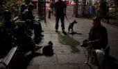 Au scos câinii la vânătoare de şobolani! Imagini marcante