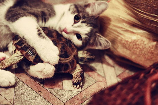 Animal lovers across species show of affection (03)