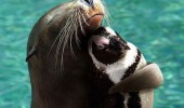 Animal lovers across species show of affection (04)
