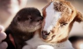 Animal lovers across species show of affection (05)