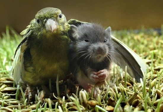 Animal lovers across species show of affection (06)