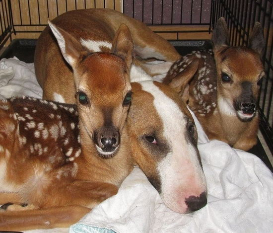 Animal lovers across species show of affection (07)