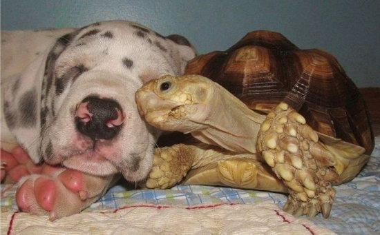 Animal lovers across species show of affection (10)