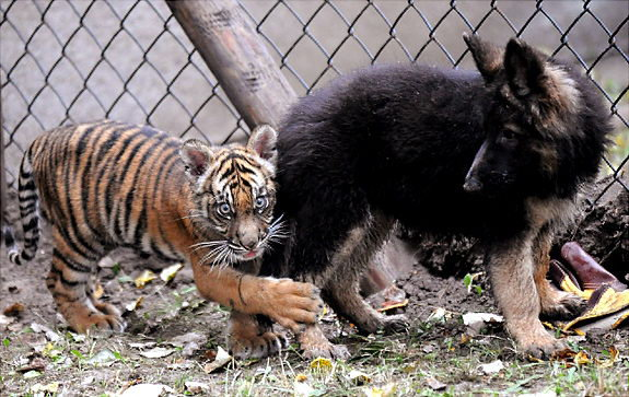 Animal lovers across species show of affection (11)