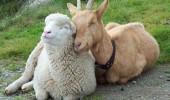 Animal lovers across species show of affection (12)