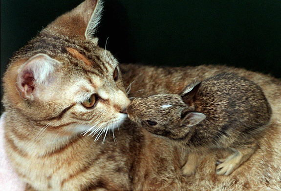 Animal lovers across species show of affection (13)