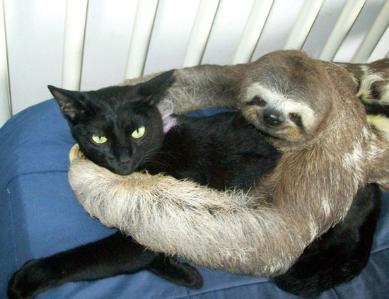 Animal lovers across species show of affection (14)
