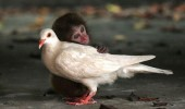 Animal lovers across species show of affection (15)