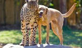 Animal lovers across species show of affection (16)