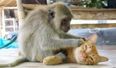 Animal lovers across species show of affection (18)