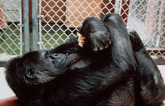 Animal lovers across species show of affection (19)