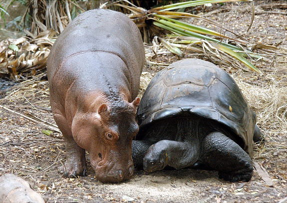Animal lovers across species show of affection (23)