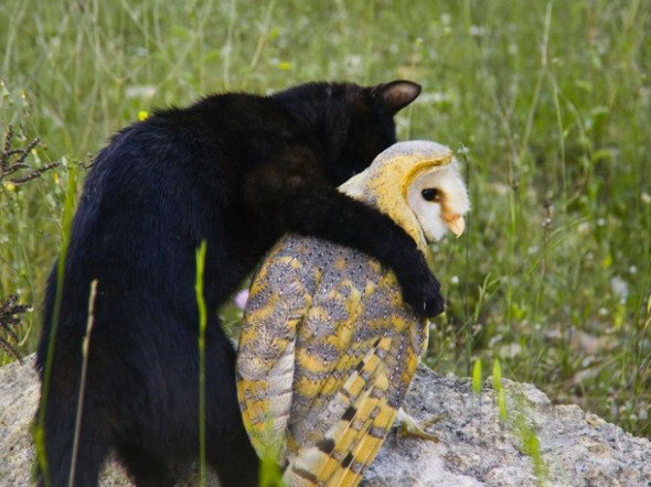 Animal lovers across species show of affection (24)