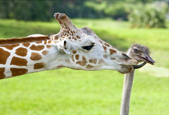 Animal lovers across species show of affection (25)