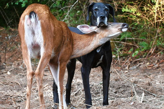 Animal lovers across species show of affection (28)