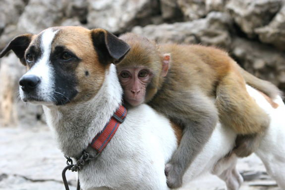 Animal lovers across species show of affection (30)